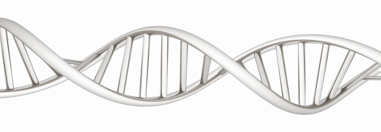 Club DNA certyfikat z profilem genetycznym